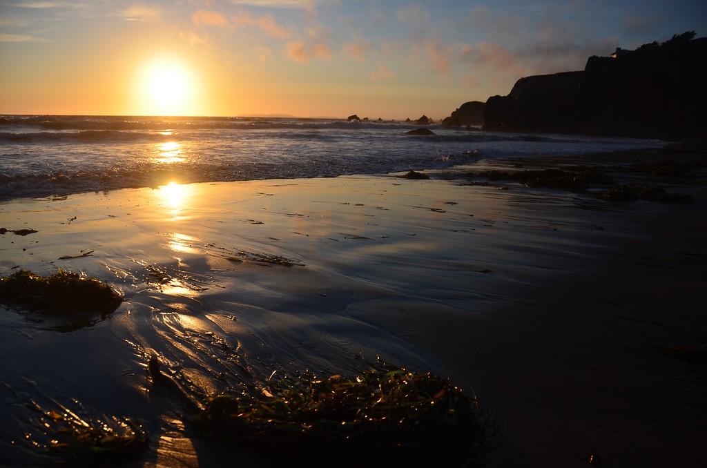 Kelp Comes to Shore