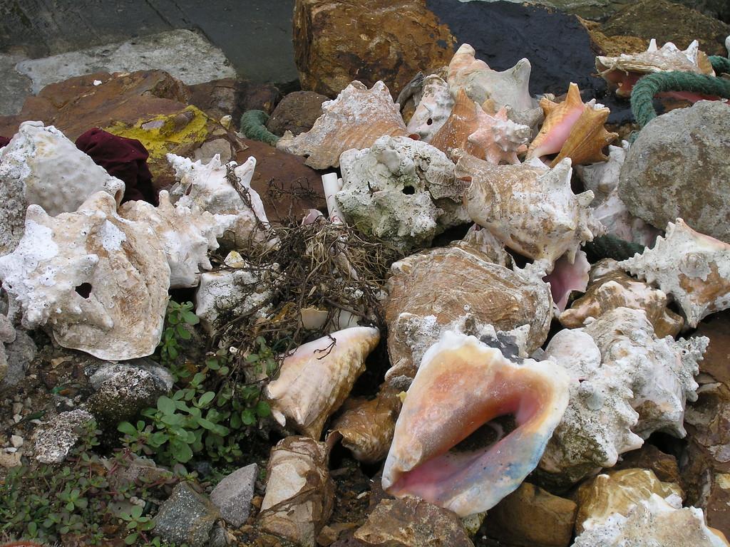 Pile O' Conchs