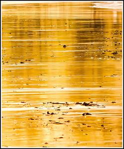 Seashore Reflections