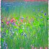 Acadia - Field Flowers