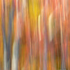 Fall Colors - Leaves and Tree Trunk