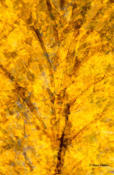 White Clay Preserve - Fall Abstract