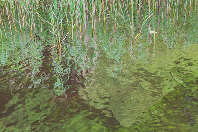 Lough Key Pier Reeds Reflections 1, Co. Roscommon