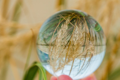 Lissadell House Grasses, Co. Sligo, in a Crystal Ball