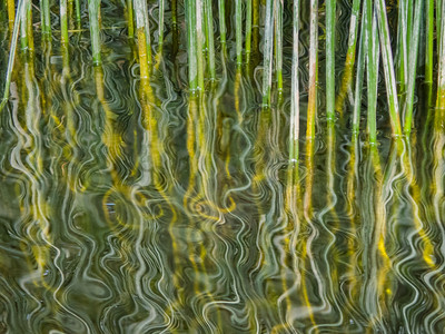 Green And Yellow Reed Reflections,  Boyle River, Co. Leitrim