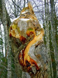Yooper Tree