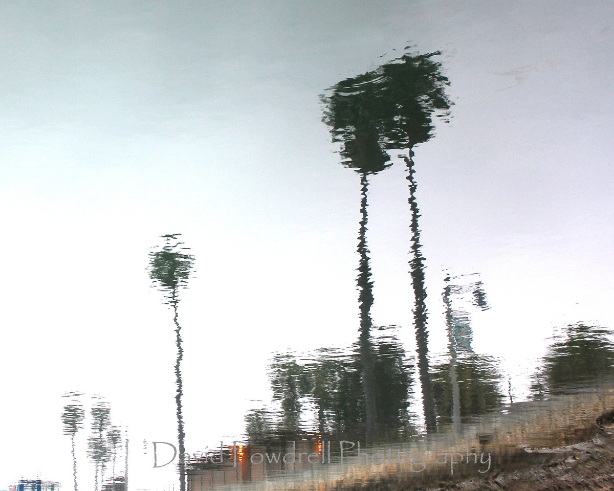 Palm Tree reflection.