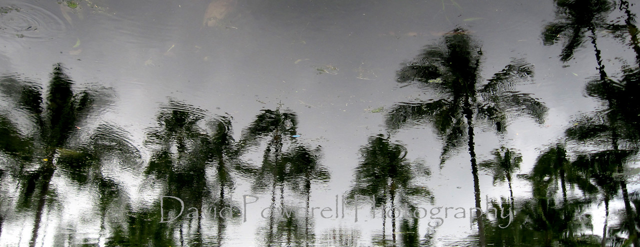 Palm tree reflections in the rain