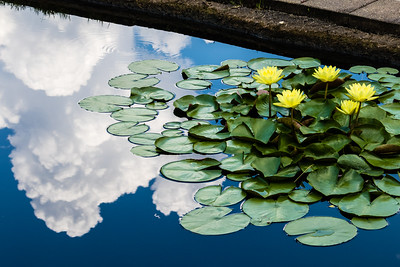 Lily Pads in the Clouds