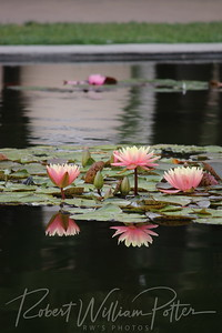 1868-Water Lilies & Reflections