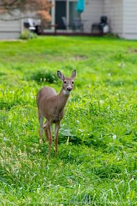 015-deer-wdsm-09oct19-08x12-008-400-4086