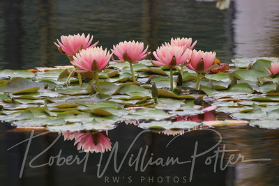 1869-Water Lilies & Reflections