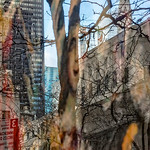 Tree Branches. Buildings, 5th Avenue