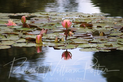 2000-Water Lilies & Reflections