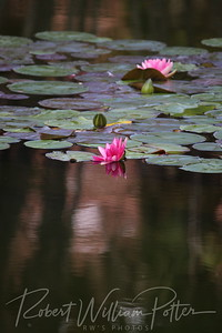 2002-Water Lilies & Reflections