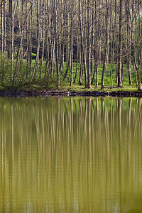 Cathédrale d'arbres