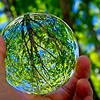 SRd1804_4692_GlassBall_Tree