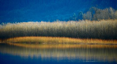 Gold and Blue Beauty, Along the Columbia River