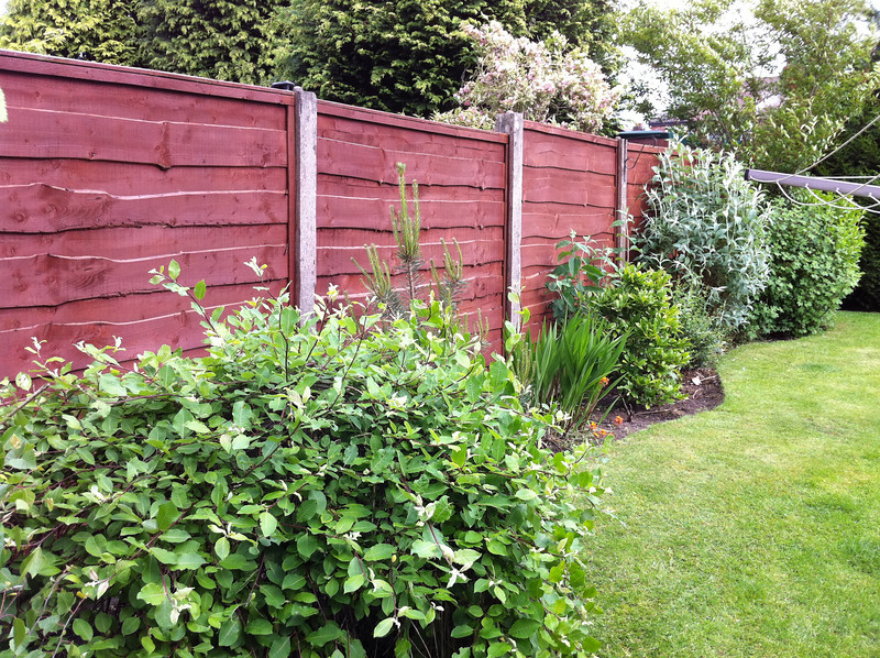 Fence Panels painted with Cuprinol.