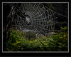 Silvery Spider Web