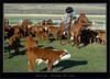 Ranch Life - Branding The Calves
