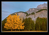 Fall Colors - Banff National Park