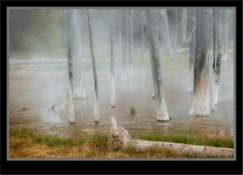 Yellowstone A Changing Landscape