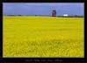 Azure Alberta