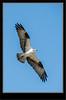 Osprey_2RK0664