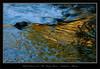 Sheep River Aspen Fall Colours