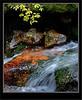 Paradise Creek - Banff National Park