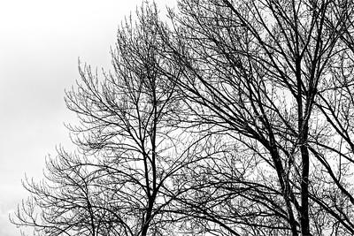 _VV_1866-a©Ch-Mouton