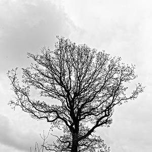 L1030266-©Ch-Mouton