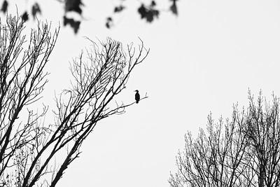_VV_6416-©Ch-Mouton