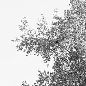 _VV_7503-©Ch-Mouton