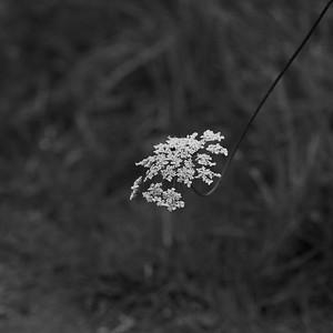 _MG_3371_DxO_©Ch  Mouton