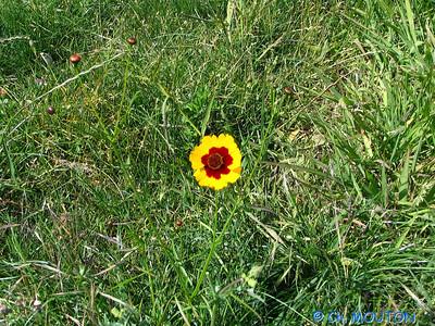 Fleurs 108 C-Mouton