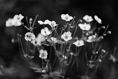 VLV_6478-©Ch-Mouton