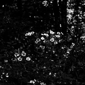 VLV_6451-©Ch-Mouton