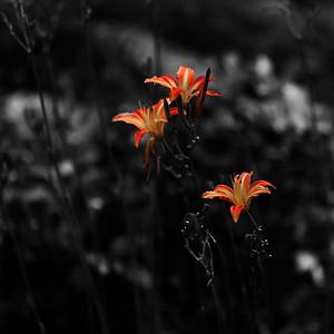 VLV_6475-©Ch-Mouton