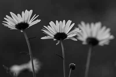 _MG_3054_©Ch  Mouton