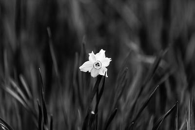 _VV_2997-©Ch-Mouton