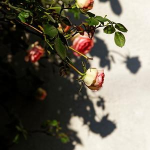 _VV_7354-©Ch-Mouton