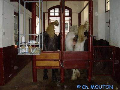 Insimination Cheval 03 C-Mouton