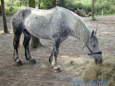 Cheval Beauce4