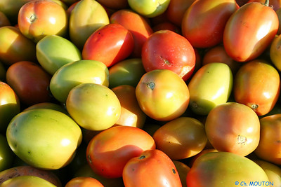 Tomate 1 C-Mouton