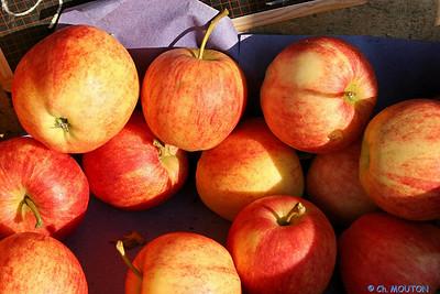 Pommes 3 C-Mouton