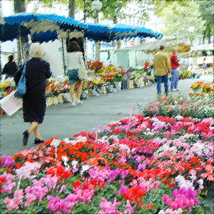 Marché fleurs Tours-carre