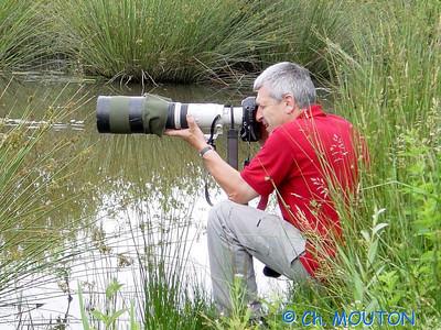 Nature Photographe 0 C-Mouton