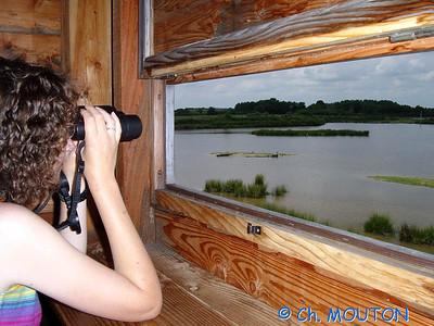 Brenne Bird Watching 01 C-Mouton
